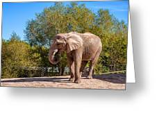 African Elephant 2 Greeting Card