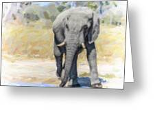 African Elephant At Waterhole Greeting Card