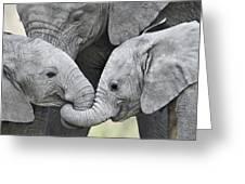 African Elephant Calves Loxodonta Greeting Card