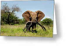 African Elephant Carying A Tree With Its Trunk Greeting Card