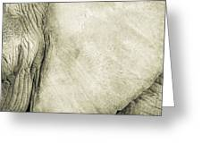 African Elephant Detail With Eye Greeting Card