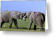African Elephant Greeting Endangered Species Tanzania Greeting Card