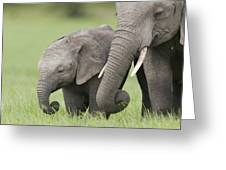 African Elephant Juvenile And Calf Kenya Greeting Card