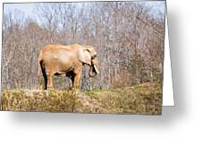 African Elephant On A Hill Greeting Card