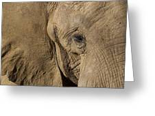 African Elephant Greeting Card