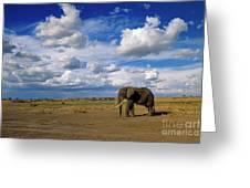 African Elephant Walking Masai Mara Greeting Card
