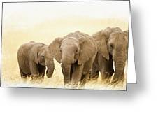 African Elephants  Greeting Card