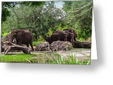 African Elephants  Greeting Card