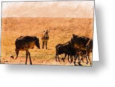 African Gathering Greeting Card