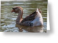 African Goose Greeting Card