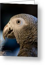 African Gray 1 Greeting Card