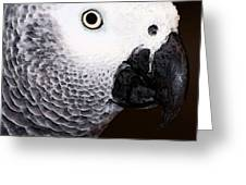 African Gray Parrot Art - Seeing Is Believing Greeting Card