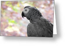 African Grey 3 Greeting Card