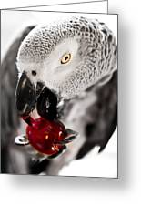 African Grey And Cherry  Greeting Card