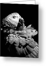 African Grey  Greeting Card by Paulina Szajek