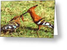 African Hoopoe Feeding Chick Greeting Card
