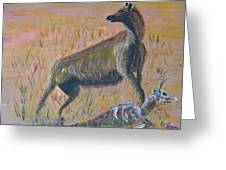 African Hyena Greeting Card