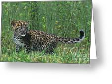 African Leopard Cub In Tall Grass Endangered Species Greeting Card