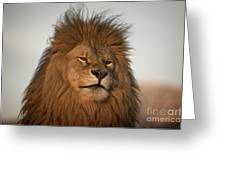 African Lion-animals-image Greeting Card