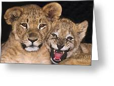 African Lion Cubs One Aint Happy Wldlife Rescue Greeting Card