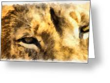 African Lion Eyes Greeting Card