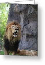 African Lion Roar Greeting Card