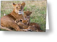 African Lioness And Young Cubs Greeting Card