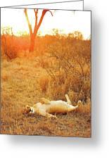 African Mammals Greeting Card