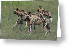 African Painted Hunting Dogs Greeting Card