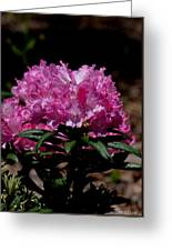 African Pink Greeting Card