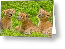 African Princesses Greeting Card by Ashley Vincent