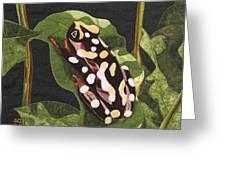 African Reed Frog Greeting Card by Lynda K Boardman