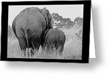 African Safari Elephants 3 Greeting Card