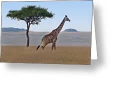 African Safari Giraffes 2 Greeting Card
