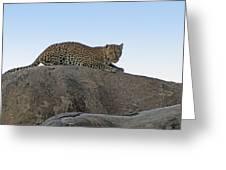 African Safari Leopard 1 Greeting Card