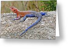African Safari Lizard Greeting Card