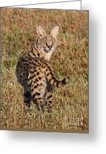 African Serval Cat 1 Greeting Card