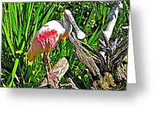 African Spoonbill In San Diego Zoo Safari Park In Escondido-california Greeting Card
