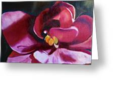 African Violet In The Light Greeting Card