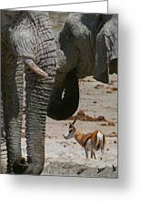 African Waterhole Greeting Card