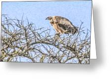 African White-backed Vulture Greeting Card
