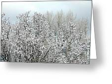 After A Light Snowfall Greeting Card