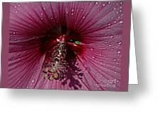 After A Rain Greeting Card