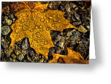 After An Autumn Rain Greeting Card