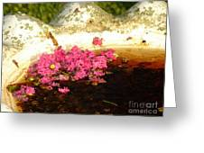 After Bloom Greeting Card