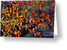 After The Autumn Rain 1 Greeting Card