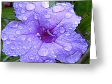 After The Rain #1 Greeting Card