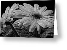 After The Rain Bw Greeting Card
