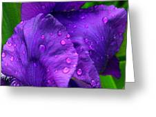 After The Sunshower Greeting Card