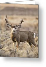 Afternoon Buck Greeting Card